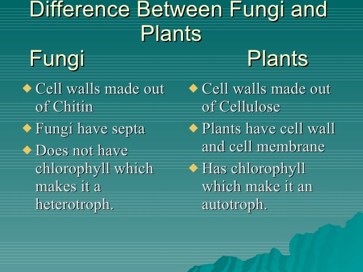 Difference between bacteria and fungi pdf