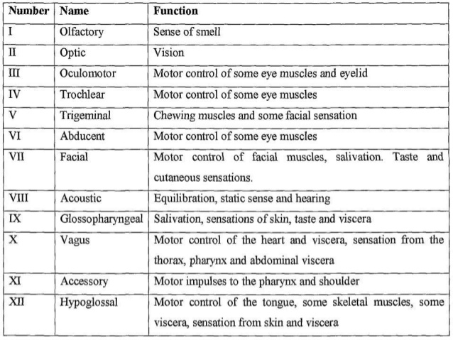 Cranial nerves and their functions pdf
