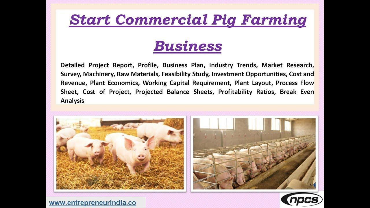 Pig farming in india pdf in hindi
