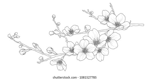Youtube how to draw cherry blossoms
